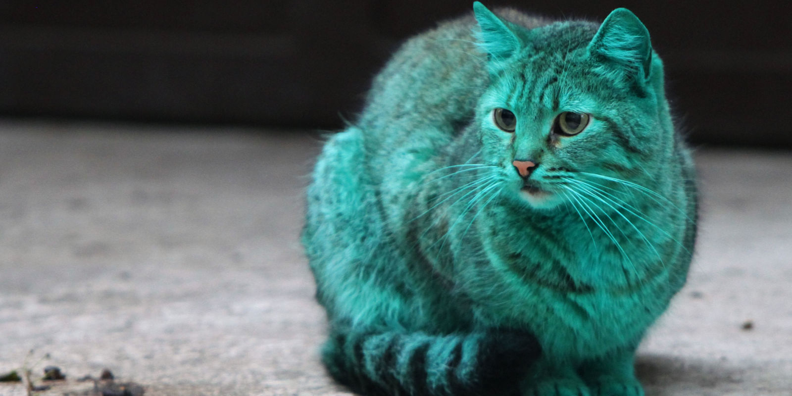 There S A Bright Green Cat Just Chilling In The Streets Of