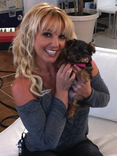 There's a lot of responsibility that comes along with being Britney Spear's pup, no matter how adorable you are! Not only do you have to live up to her superstar status (and judging by the pink collar we think she's doing a fab job so far) but you also have to be a celebrity in your own right. Yup, to make sure her new pup Hannah got the attention she deserves, Britney set her up with her own Twitter which (despite only having tweeted a few times) she's already got nearly 10,000 followers. Careful, Britney, you could be creating a little diva!